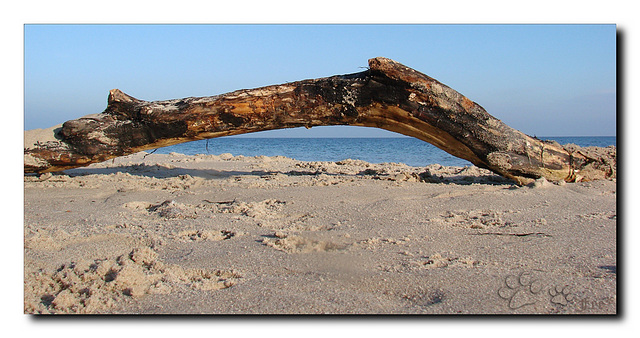 Heute am Strand...