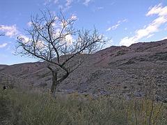 Johnson Canyon (6556)
