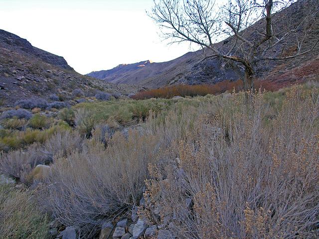 Johnson Canyon (6553)