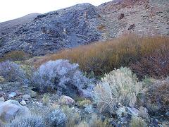 Johnson Canyon (6548)