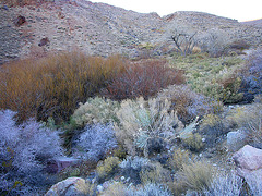Johnson Canyon (6547)