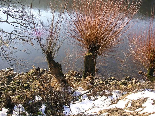 Normaler Wasserstand - Januar 2006