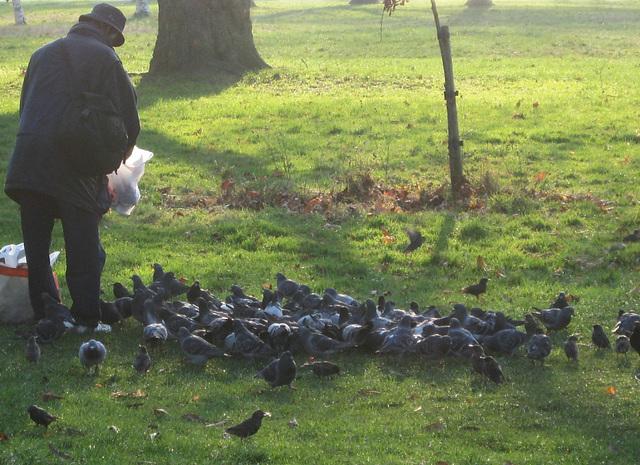 Repas des oiseaux
