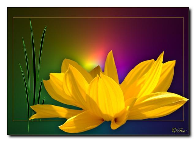 *Flower Power*