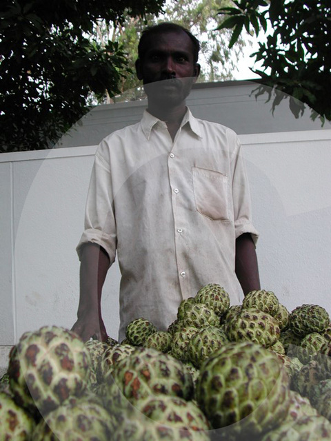 selling custard apples