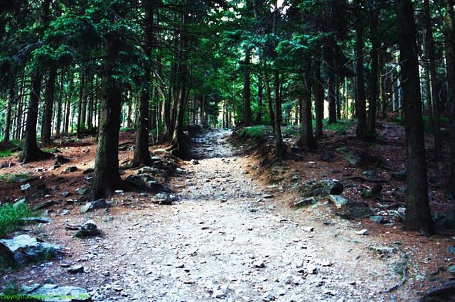 Trail to Stepanka, Liberecky Kraj, Bohemia(CZ), 2007