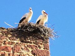 Algarve, Silves, stork's nest