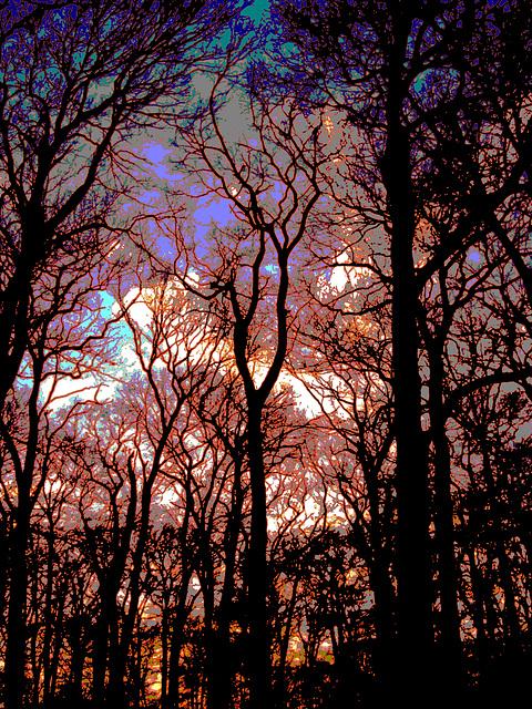 Wolken überm Wald