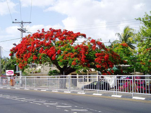 Mauritius048