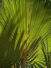 Mauritius045