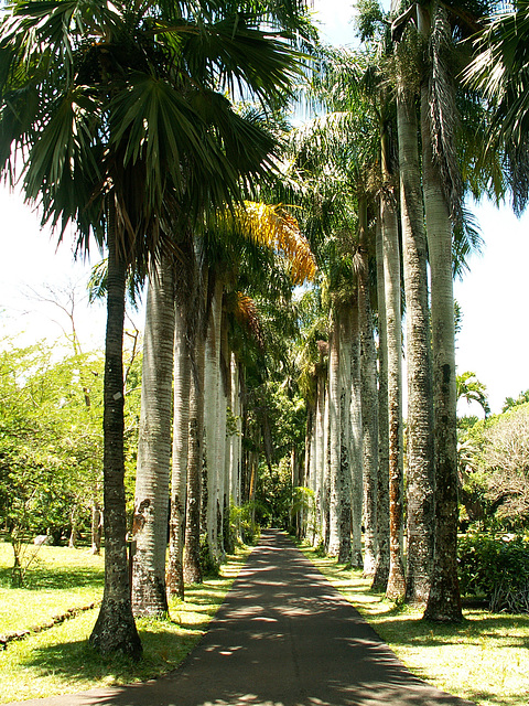 Mauritius042