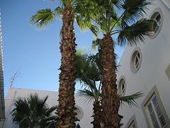 Algarve, Loulé yard