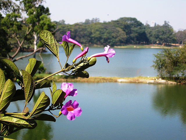 Lalbagh Tank