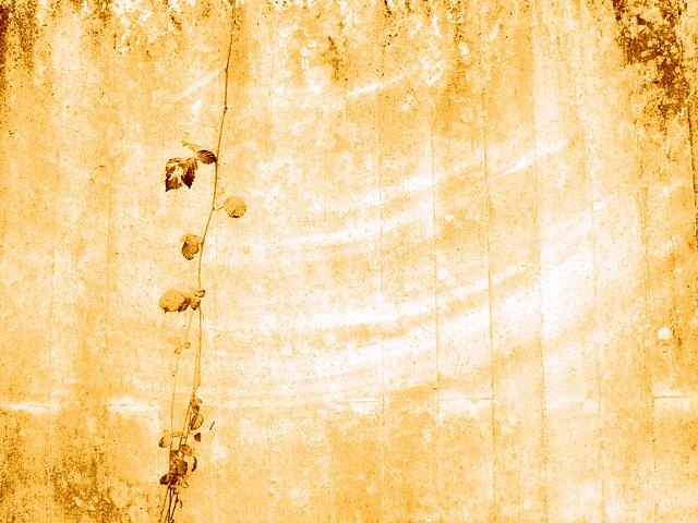 der Wind schlägt Kreise / circels of wind