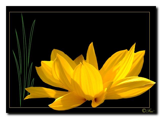 Flower (ohne Power)