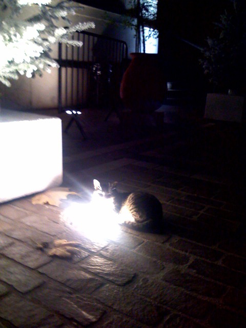 Cat heating himself with a floor projector