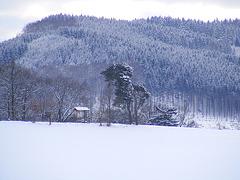 """Der """"Afrikabaum"""" im Schnee"""