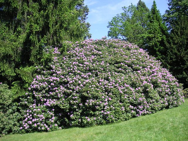 Rhododendronpark in Rathen