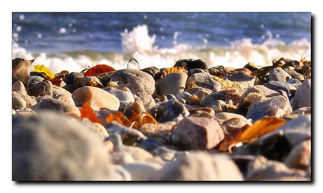 Stones , leaves...
