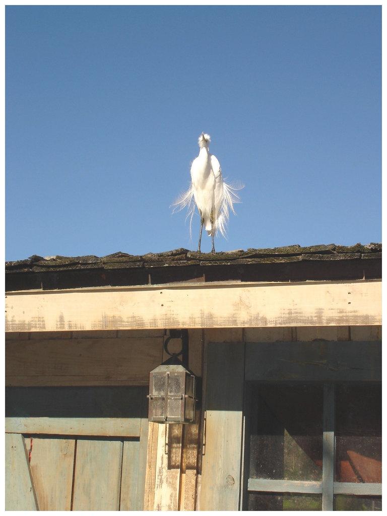 Le roi du toit / The roof King - Disneyworld -  27 décembre 2006.