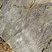 Titus Canyon Petroglyphs (1196)