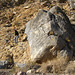 Titus Canyon Petroglyphs (1197)