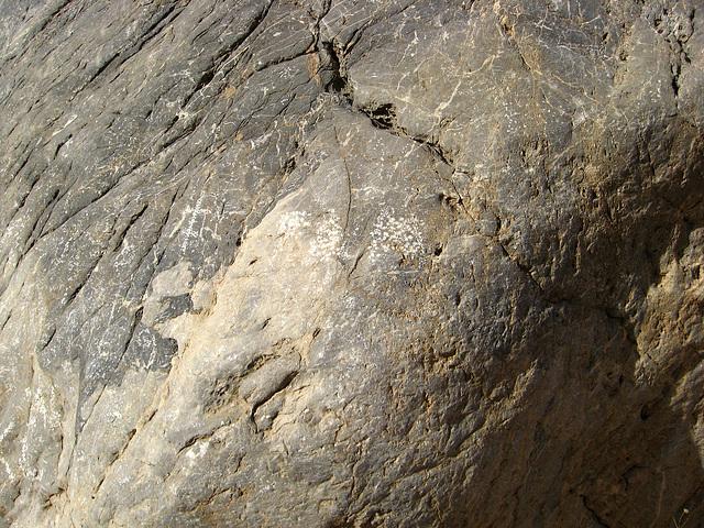 Titus Canyon Petroglyphs (1198)