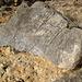 Titus Canyon Petroglyphs (1199)
