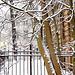 Neĝoĝuantoj - Schneegeniesser