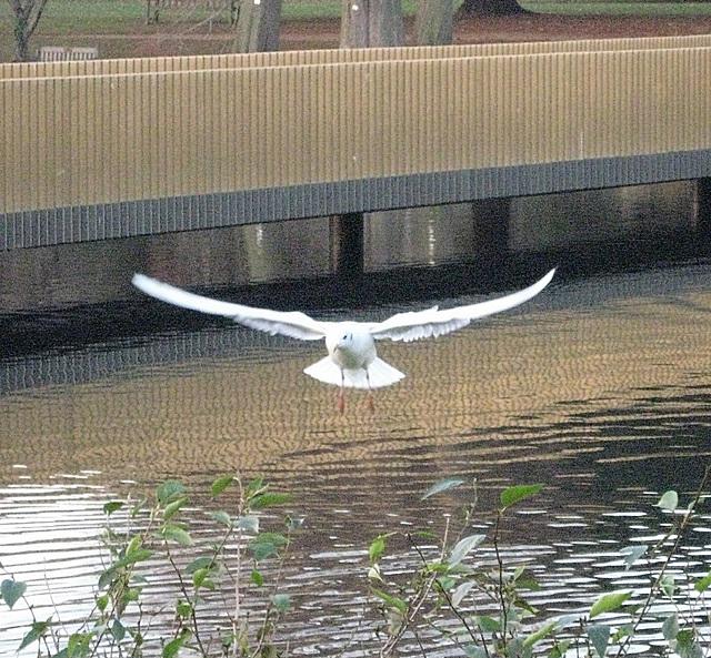 Bird and bridge.