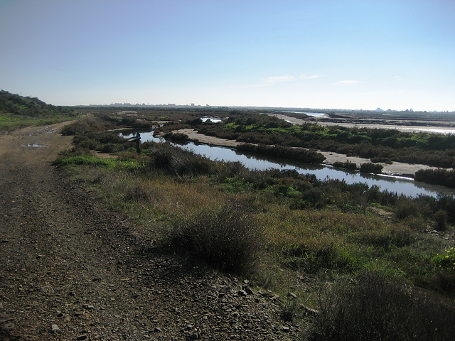 Algarve, Natural Reserve of Castro Marim (3)