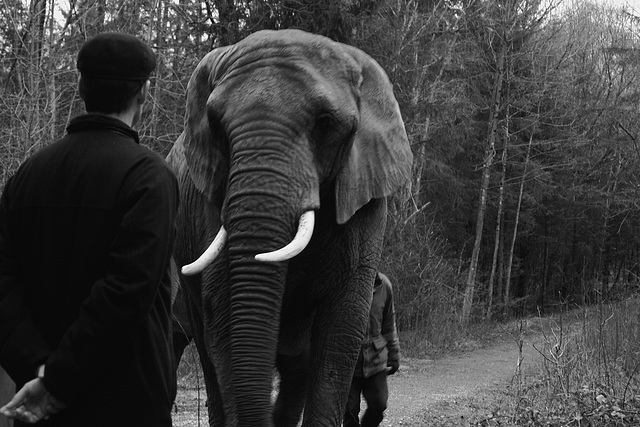 Elephants at Icking 2