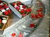 Kamelienblütenschau - März 2009