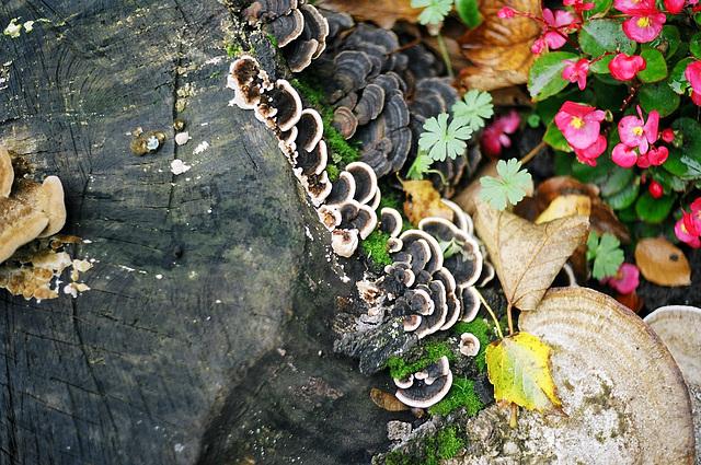 Flora and fungi
