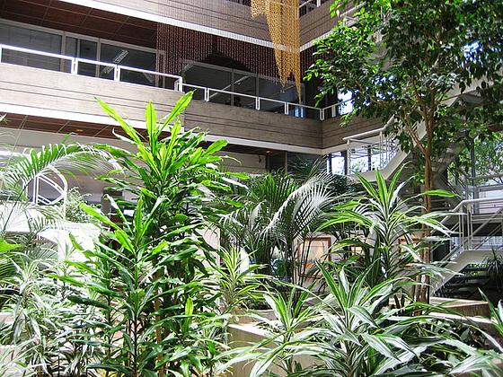 Lisboa, interior garden