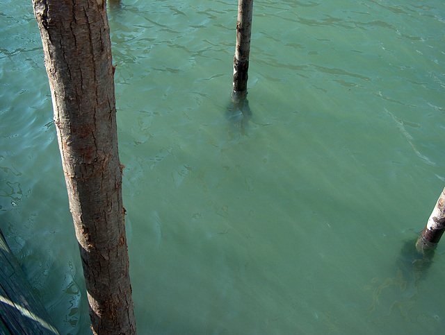 Water of the Canale Grande, Venice / HPIM3113