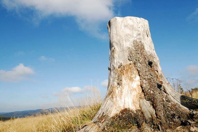 Rauchender Baumstumpf