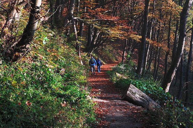 Wald bei Winterberg