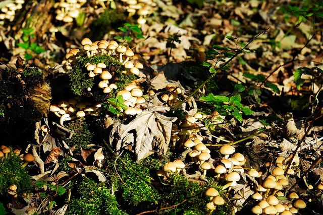 Kein Mangel an Pilzen