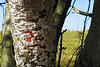 Pockennarbiger Baum