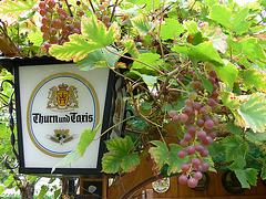 Weintrauben-Ranken