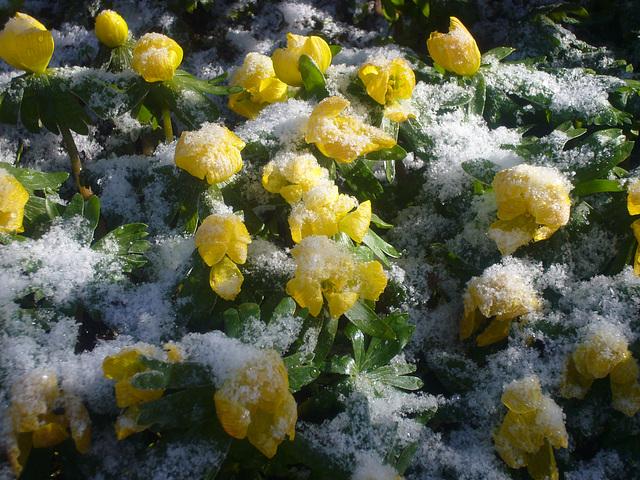 nach Sonne Schnee