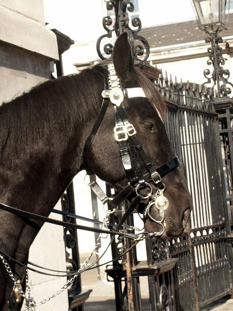 guard horse