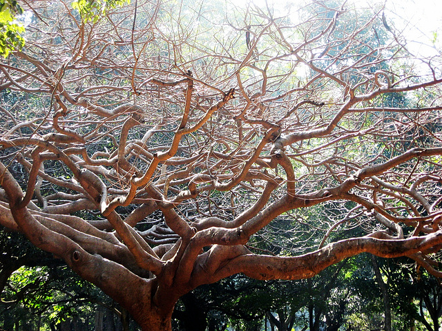 Sunlit branches