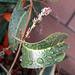 Raindrops On Leaf (8458)