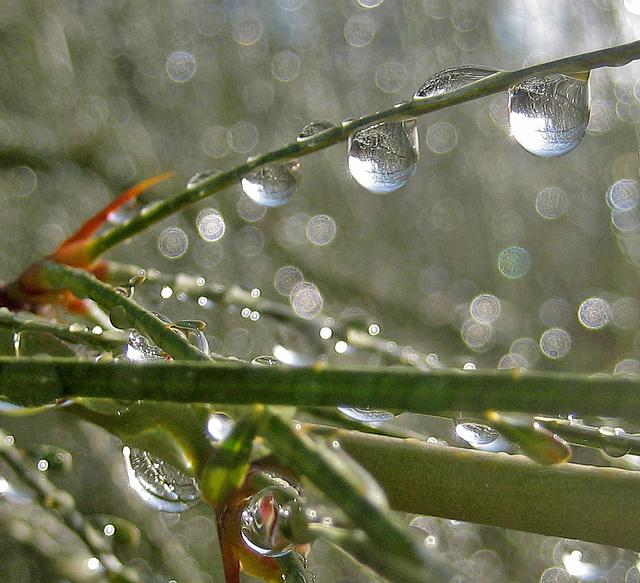 Rain on Palo Verde (8446)
