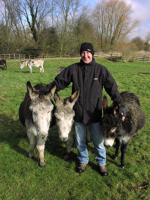 Donkeys 012