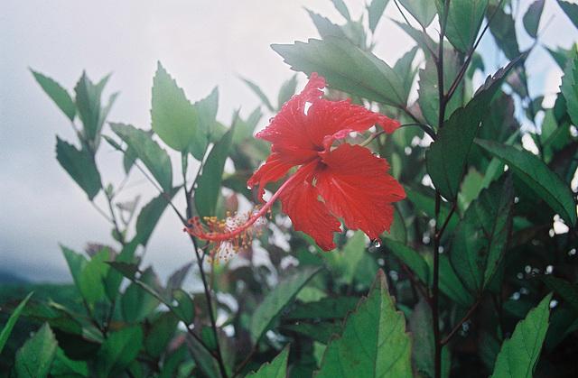 La trace des jésuites Martinique 2006