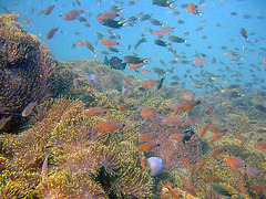 Under water life near Phi Phi island