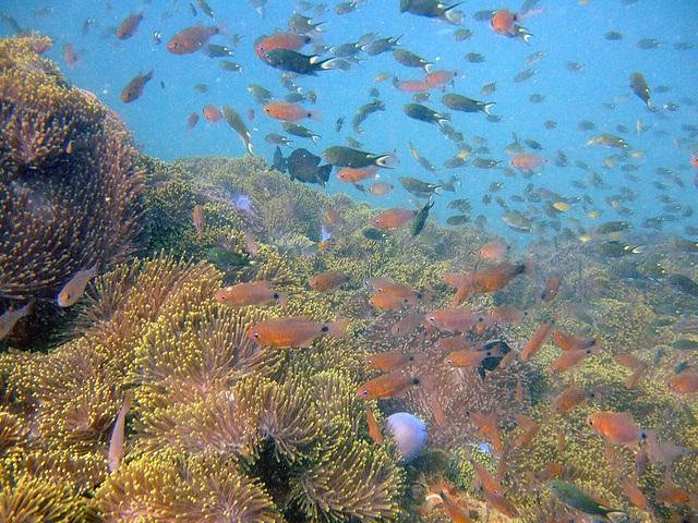 Under water life near Phi Phi island